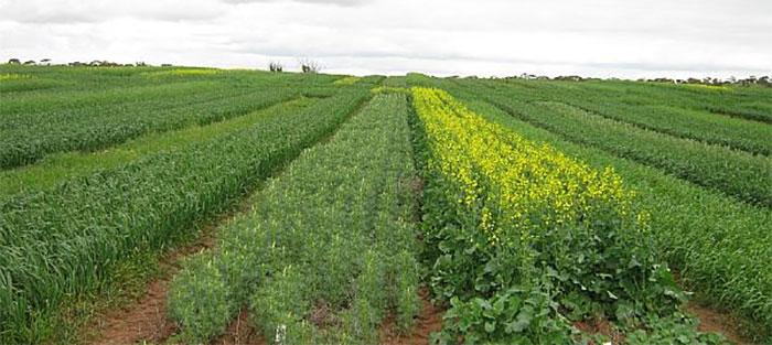 Natural gas critical in making fertiliser