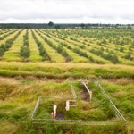 CSG and farmers coexistence